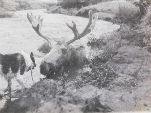 Верный друг охотника
