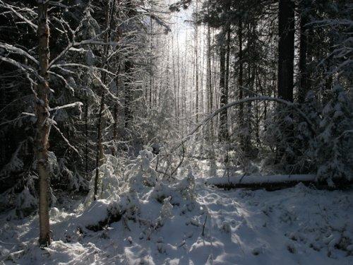 Окрестности зимовья