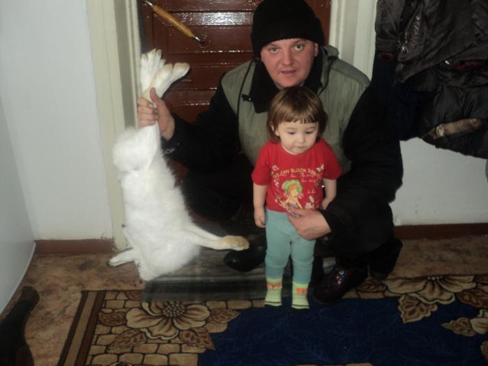 или заяц большой или доча маленькая
