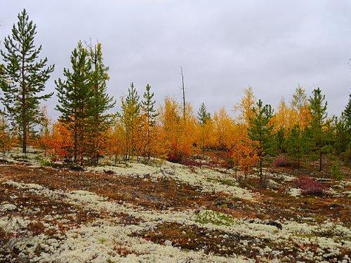 Осень на севере