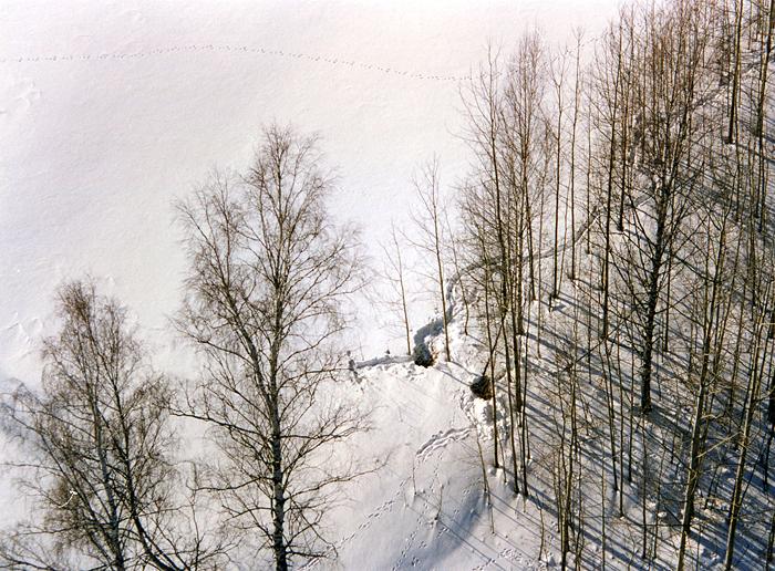 Зимовка косули в условиях глубокоснежья
