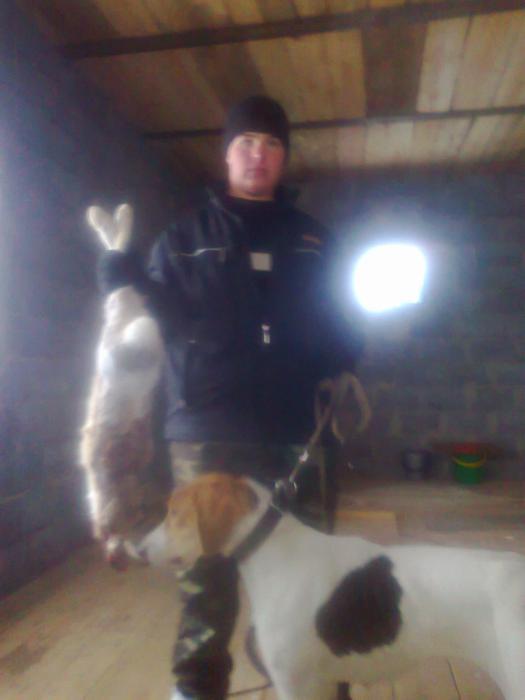 16 ноября 2012 взяли зайца (фото уже дома)