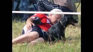 Всероссийская выставка охотничьих собак 2012 г.