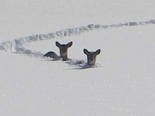 ВНИМАНИЮ охотпользователей и охотников- любителей - Животный мир на грани выживания!!!!