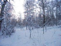 после ночного снегопада