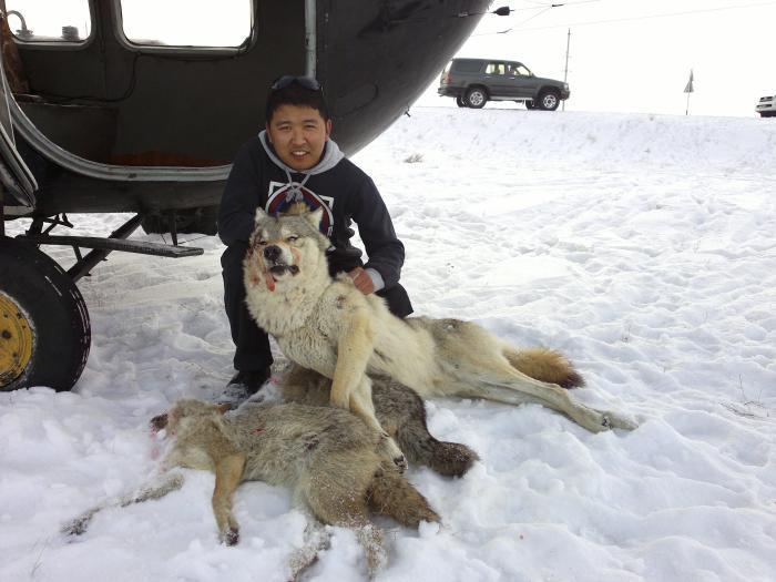 Вожак волков