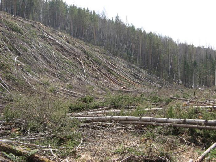Почему лес повален???