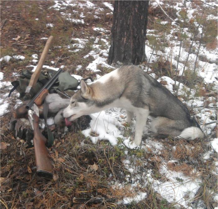 фото с охоты сайт сибирский охотник кто-то прохожих увидел