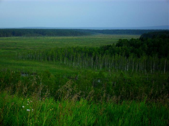 Саратовское болото