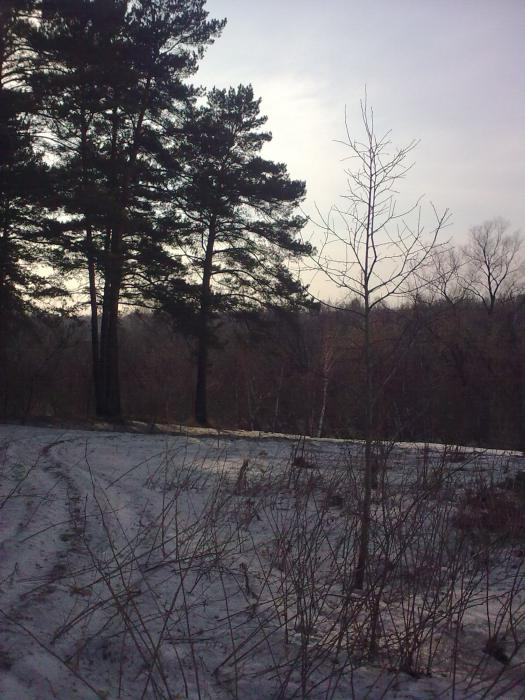 Весенняя дорожка в лес...