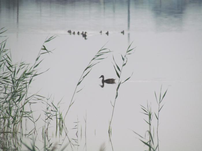 водоем в черте города.лето, скоро на охоту