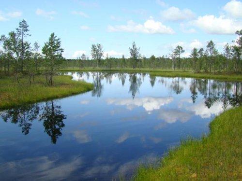 лыва на болоте