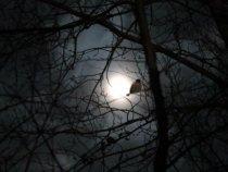 В лучах луны