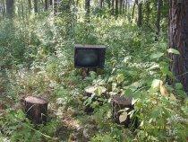 Ностальгия по лету.Лесной кинозал.