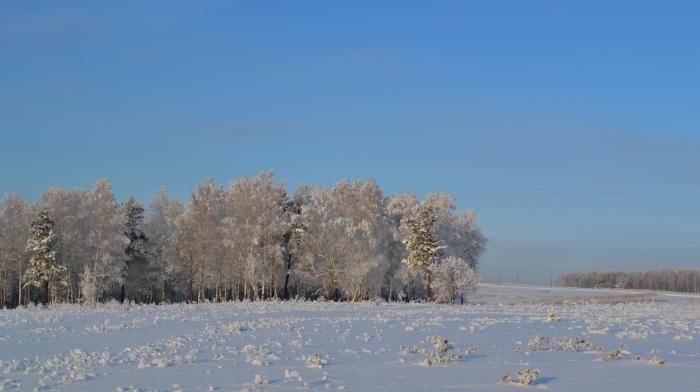 Лес возле дома
