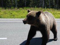 Медведи по улицам ходют-Россия!!!!!