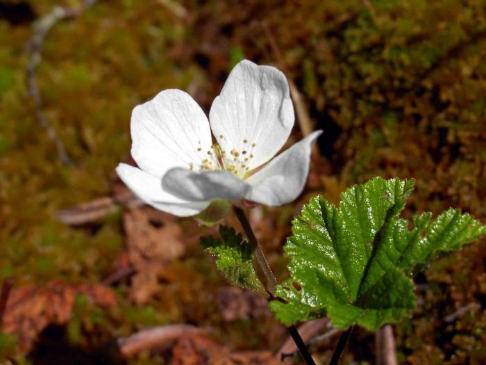 Весна вКогалыме-1