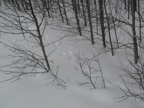 Проводы Зимы или выход в лес на Масленицу
