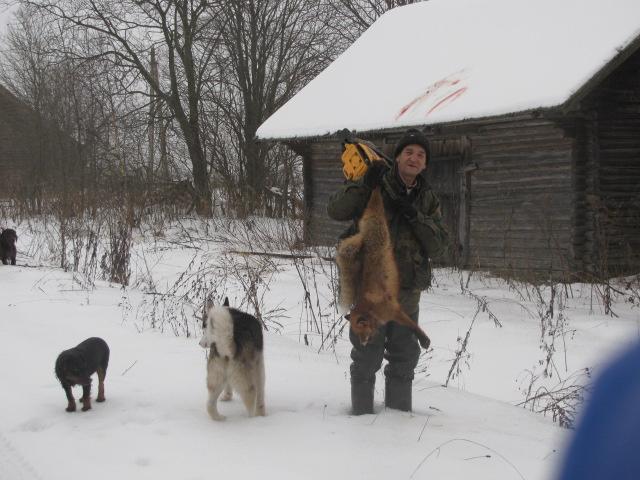 пошли погулять за деревню с собаками,а под сараем ягд лису приговорил