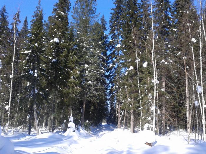 прогулка по лесу  1