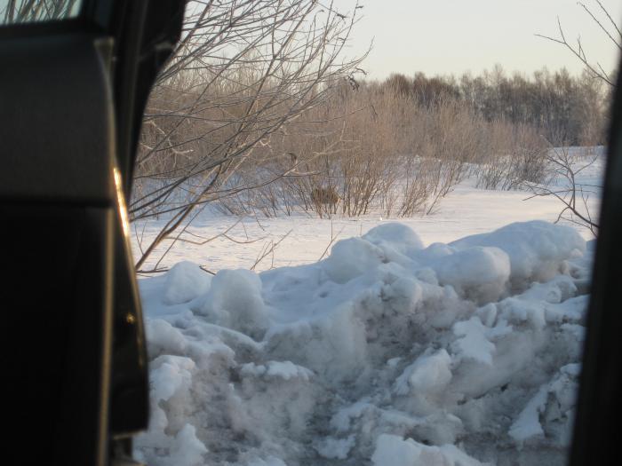 Та же проселочная дорога, но уже рогатый козлик, лежит ноль внимания на машину....