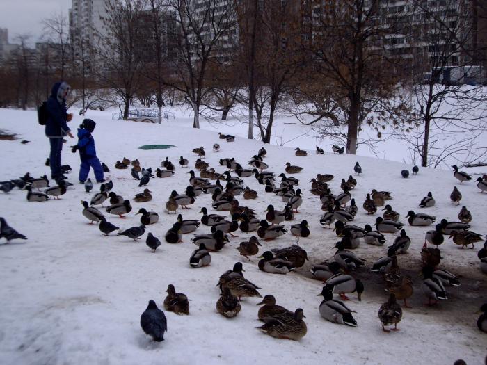 МОСКВА 20.03.2013