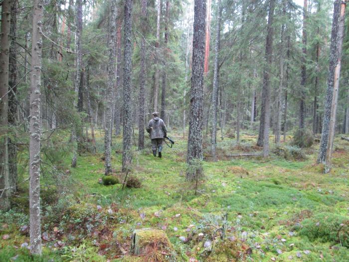 Питерский лес и брат