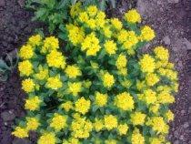 Цветы дарят радость, всем....