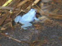 натуральный голубой
