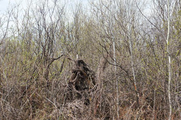 Здесь леший прячется в кустах.