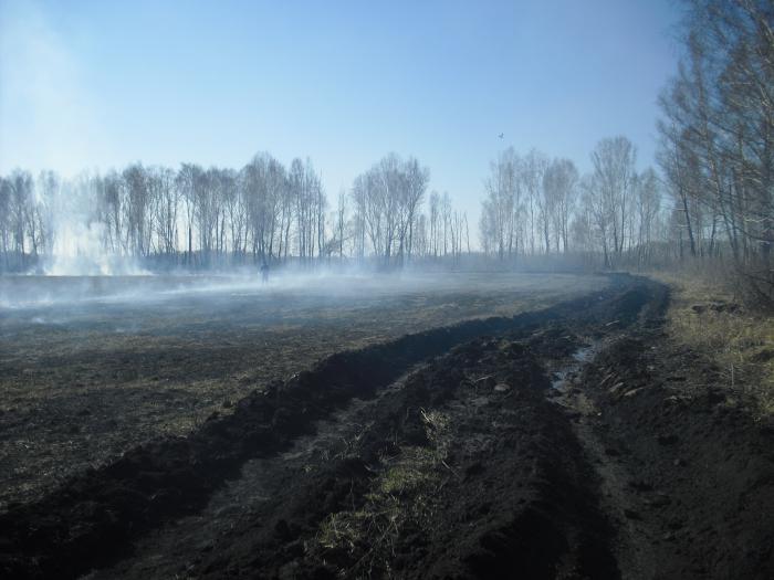 Только так можно спасти лес от огня.