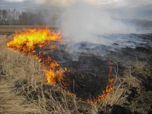 Лесной пожар. Уничтожает все живое в природе!