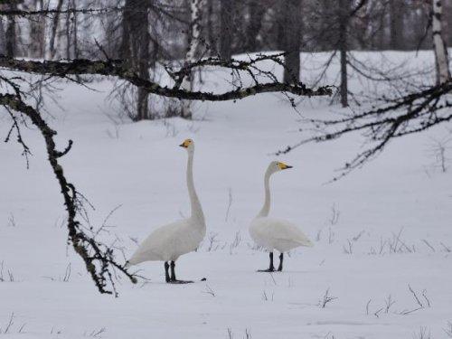 Лесные птицы)))
