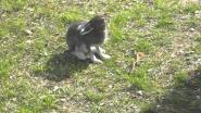 Заяц с Нюрольки. Часть 1