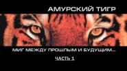 Амурский тигр. Миг между прошлым и будущим
