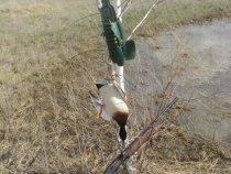 Закрытие весенней охоты 2013 год.