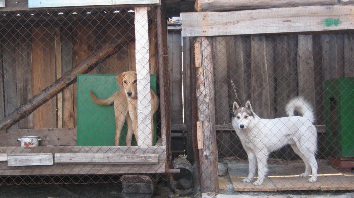 Мои собакины)