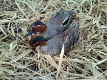 Весения охота 2013