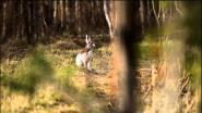 Весенние встречи с зайчишками