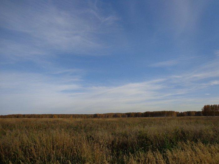 Гусиный клин над полем.