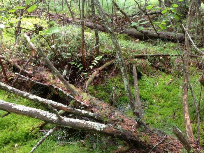 Заросли в лесу