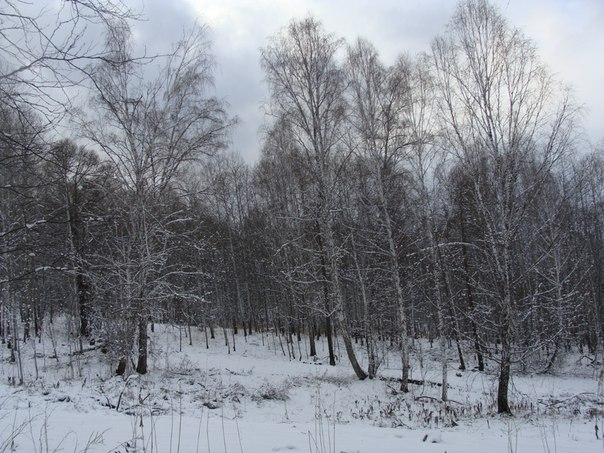 Три дня зимы:)