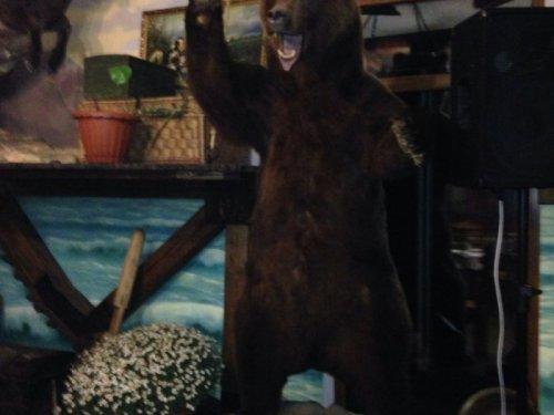 Трофейный уголок. Медведь. Рост за 2м.