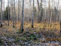 Типичные места обитания беляка