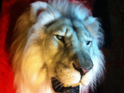 Морда Белого Льва