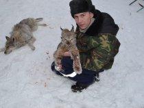 Рысь, волк.