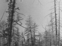 Якутское далёко. Навигация советского периода.