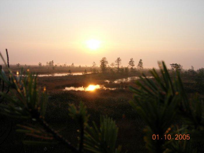 утро в болоте