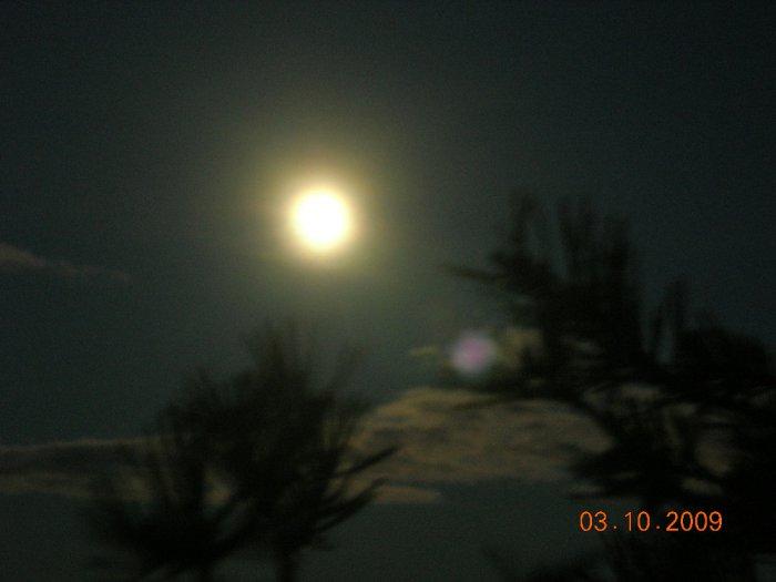 таинственная ночь в болоте