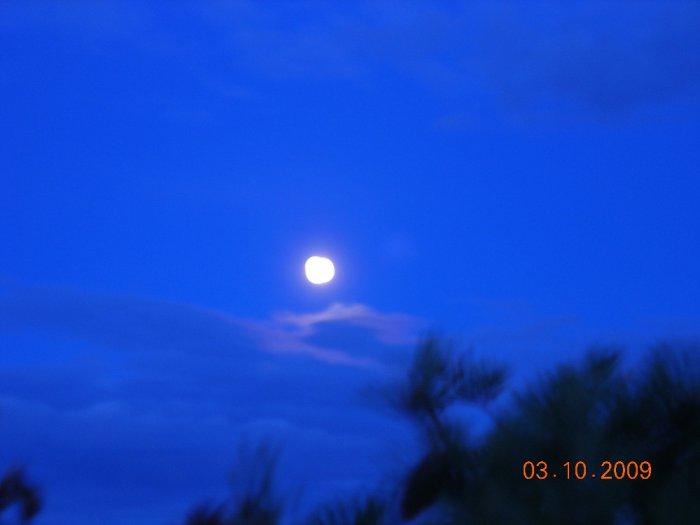 волшебная ночь в болоте